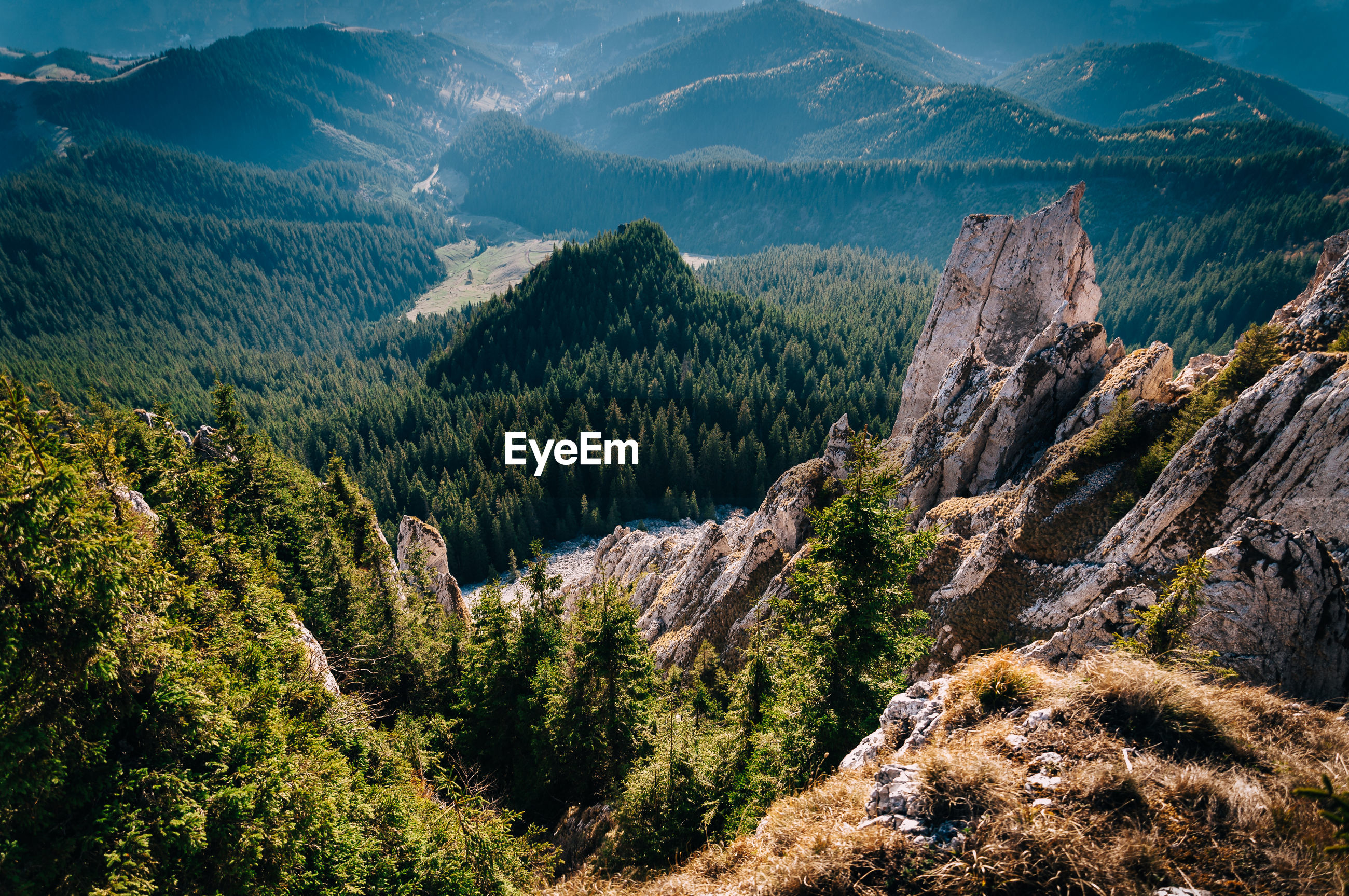 HIGH ANGLE VIEW OF TREES ON MOUNTAINS