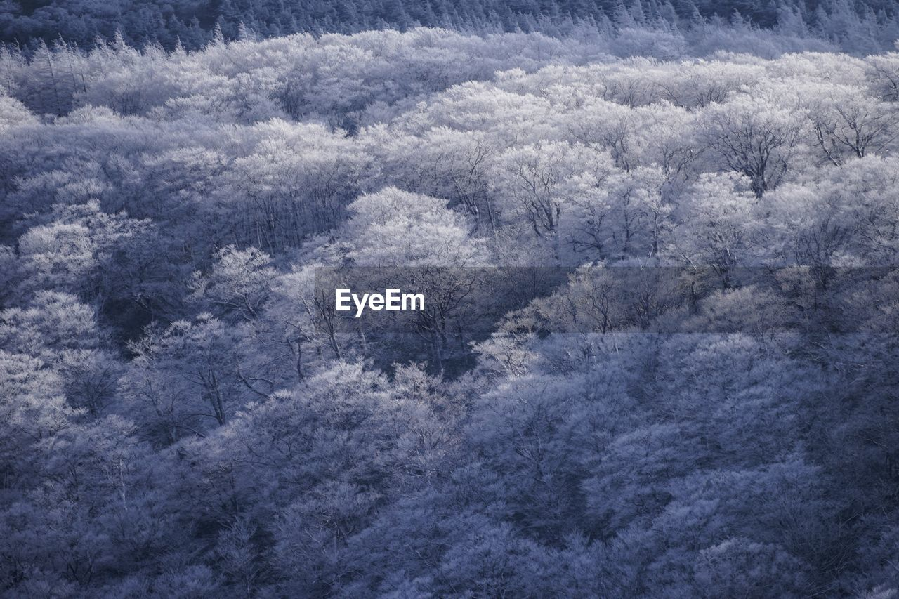 nature, no people, outdoors, forest, beauty in nature, day, high angle view, tree, cold temperature, backgrounds, scenics, winter, close-up, freshness