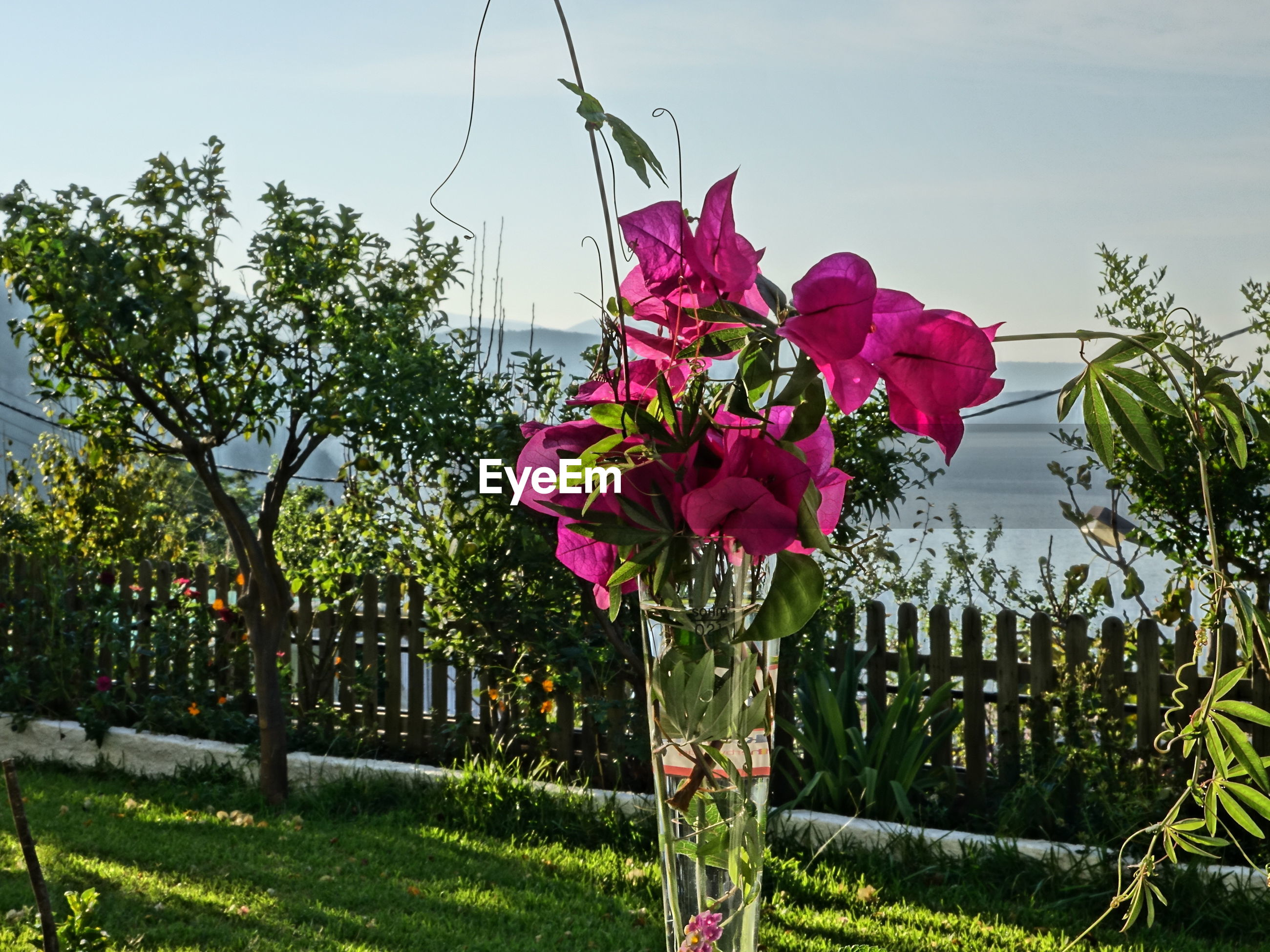 flower, freshness, growth, fragility, tree, sky, beauty in nature, nature, blooming, building exterior, plant, built structure, blossom, in bloom, low angle view, leaf, petal, pink color, field, architecture