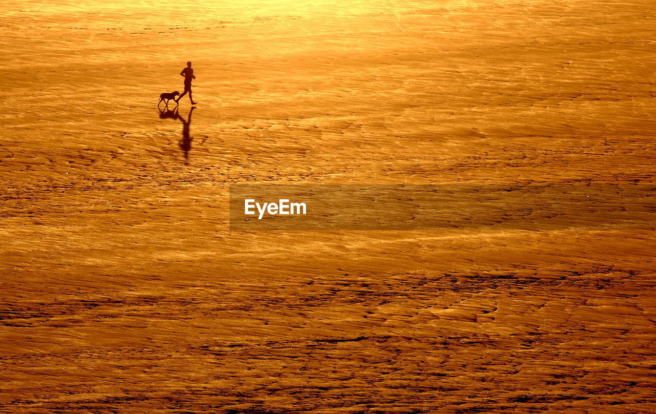High Angle View Of Silhouette Man Running With Dog At Beach During Sunset