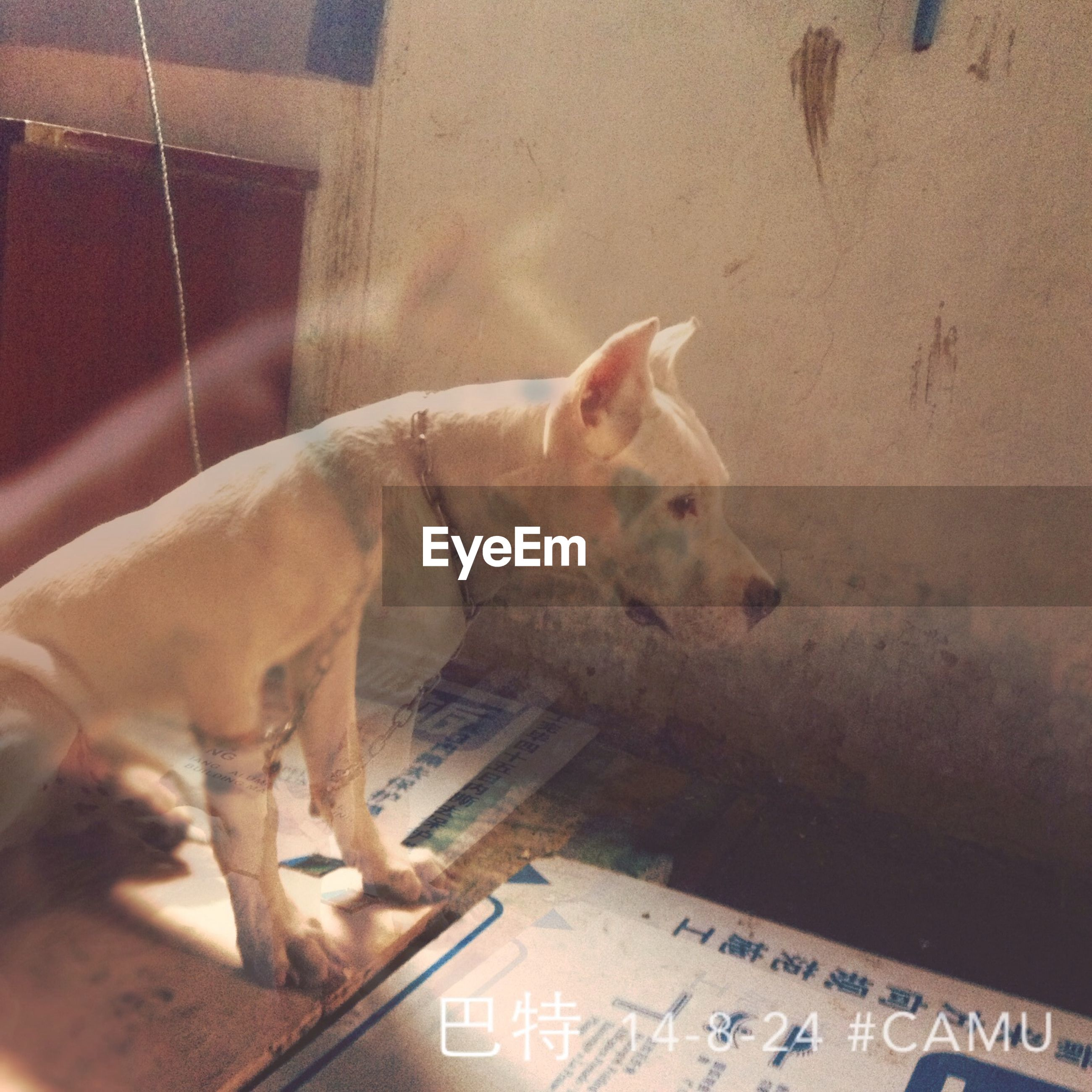 mammal, animal themes, indoors, domestic animals, one animal, pets, high angle view, domestic cat, cat, relaxation, text, feline, no people, sleeping, day, side view, close-up, western script, wall - building feature, resting