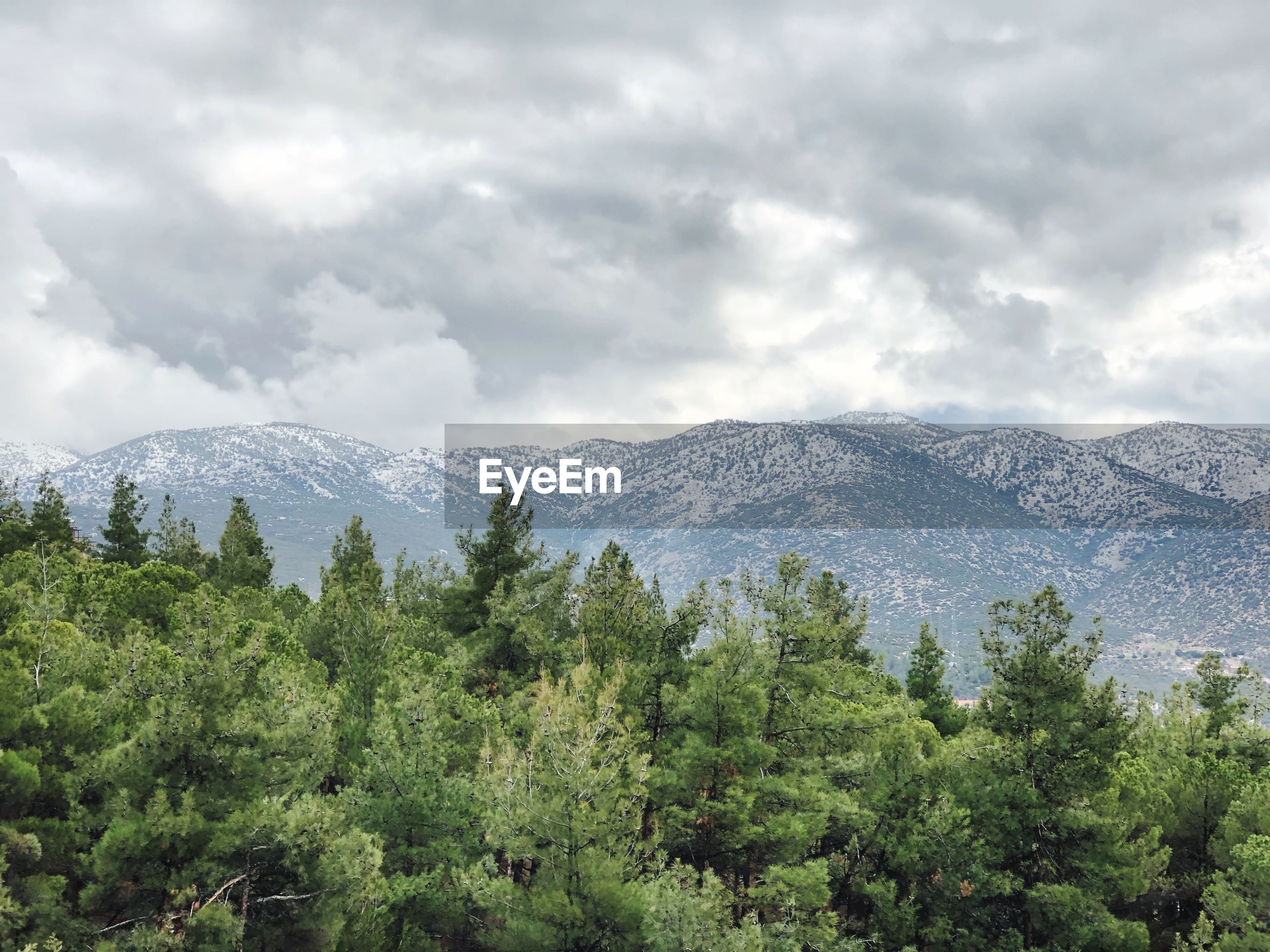SCENIC VIEW OF TREES AND MOUNTAIN AGAINST SKY
