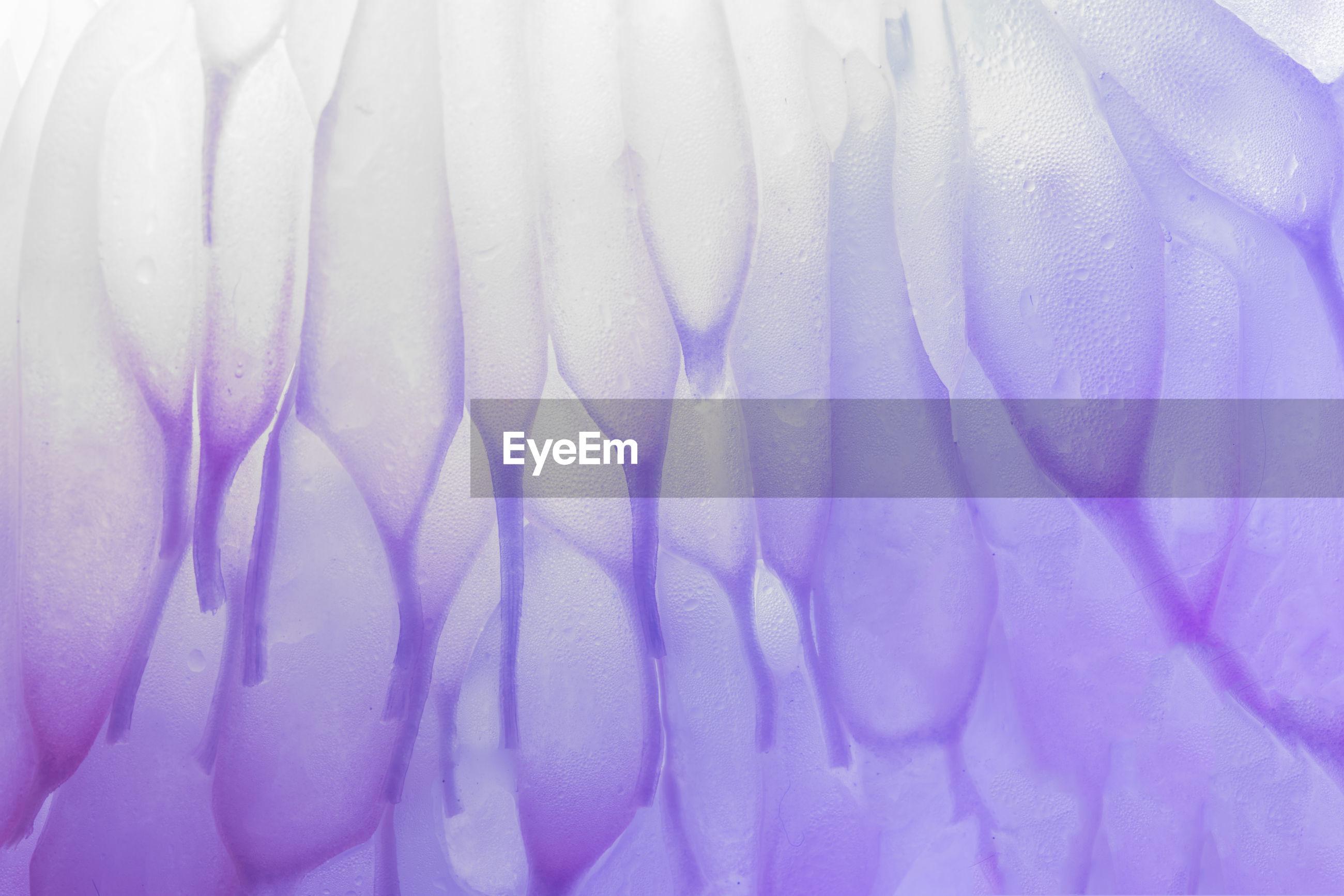 Digital composite image of purple grapefruit flesh