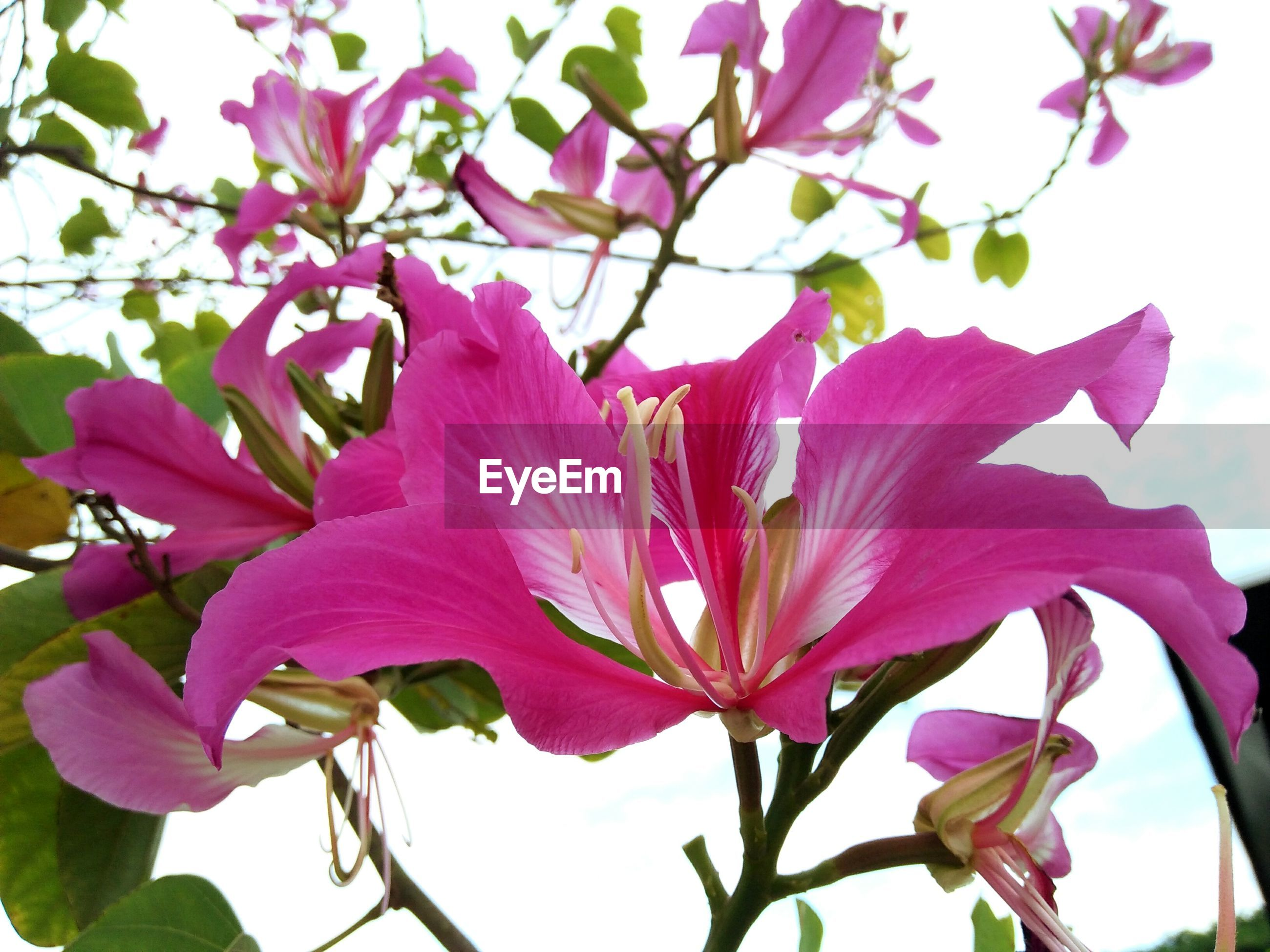 flower, petal, pink color, beauty in nature, fragility, nature, growth, freshness, no people, flower head, close-up, day, blooming, plant, tree, branch, outdoors