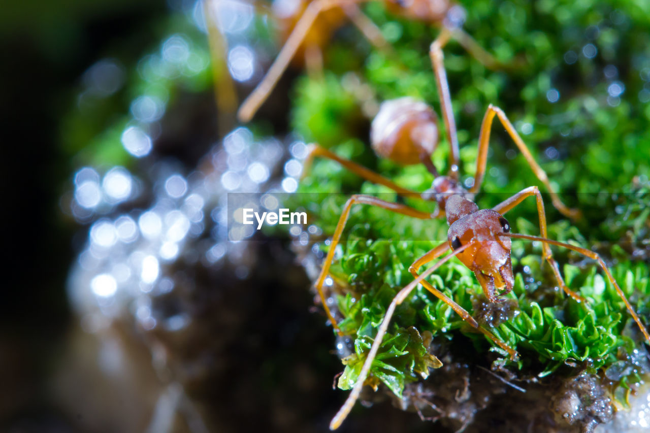 animal wildlife, one animal, close-up, animals in the wild, animal themes, animal, plant, no people, green color, invertebrate, nature, insect, selective focus, day, growth, focus on foreground, leaf, plant part, animal antenna, outdoors