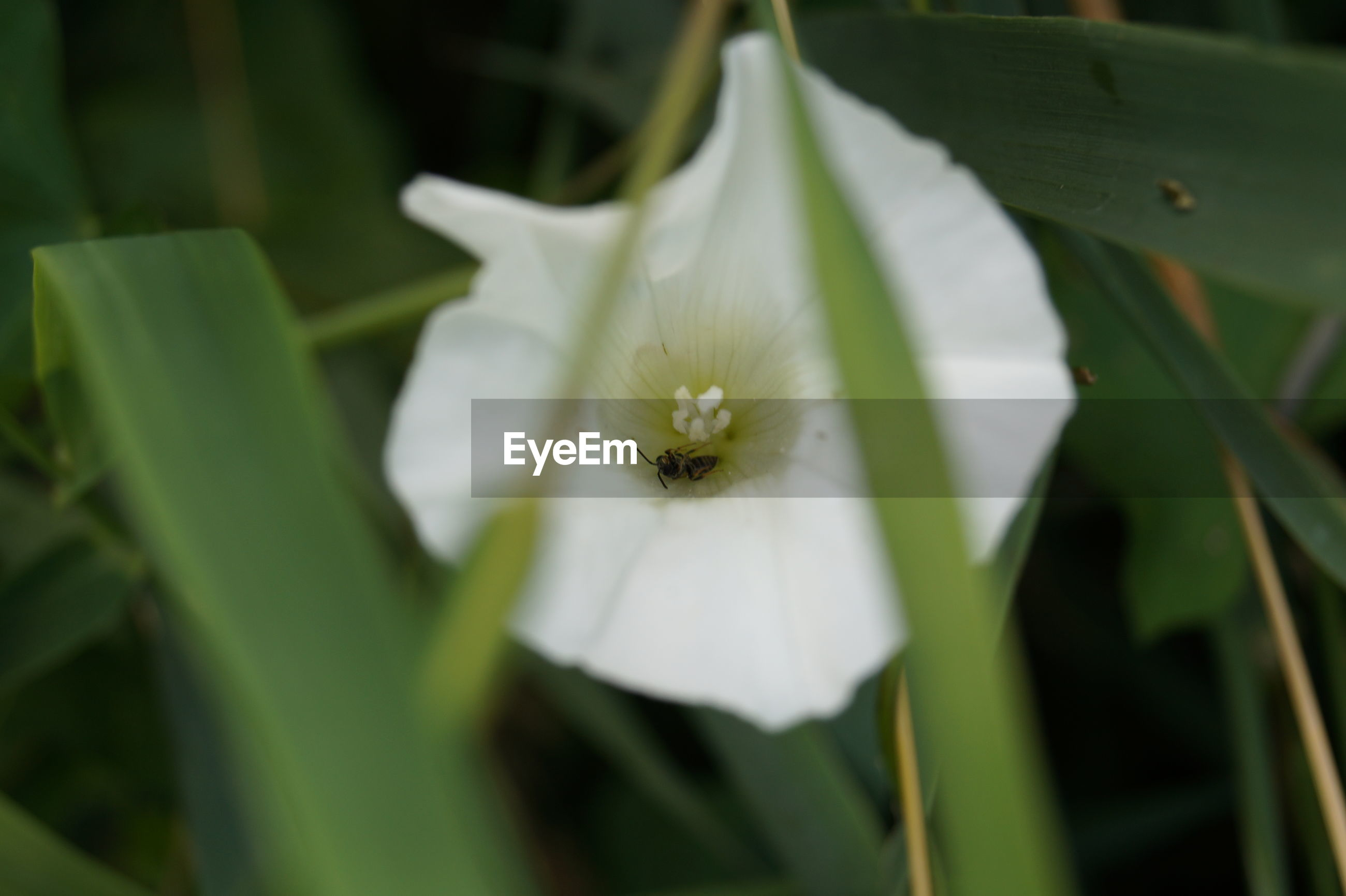 CLOSE-UP OF WHITE FLOWER BLOOMING