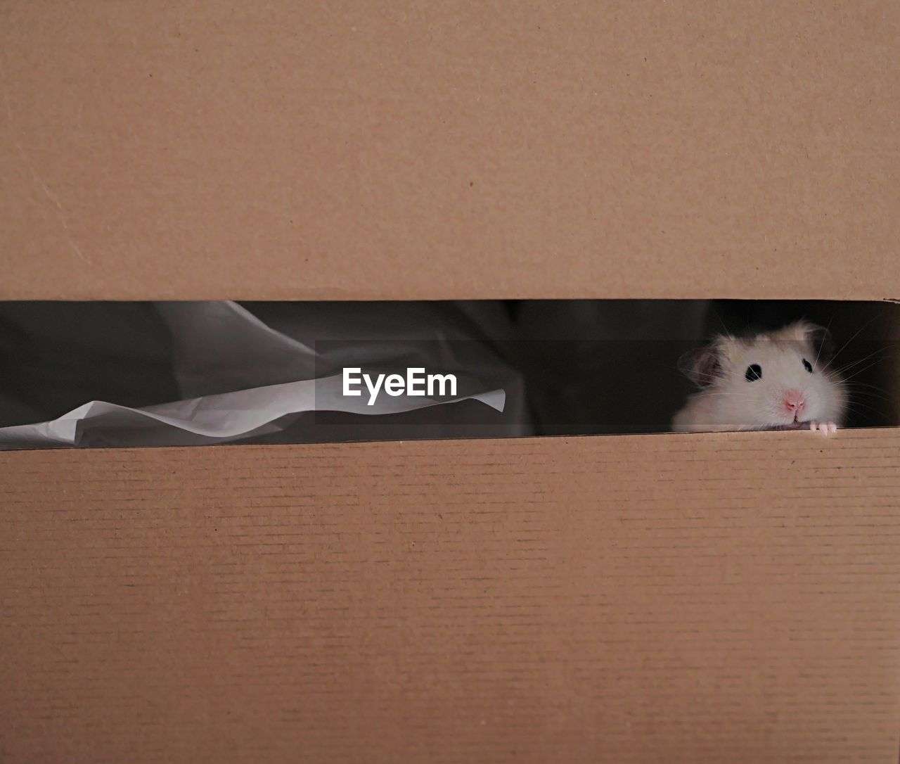 Cute sympathetic hamster looking out of carton box