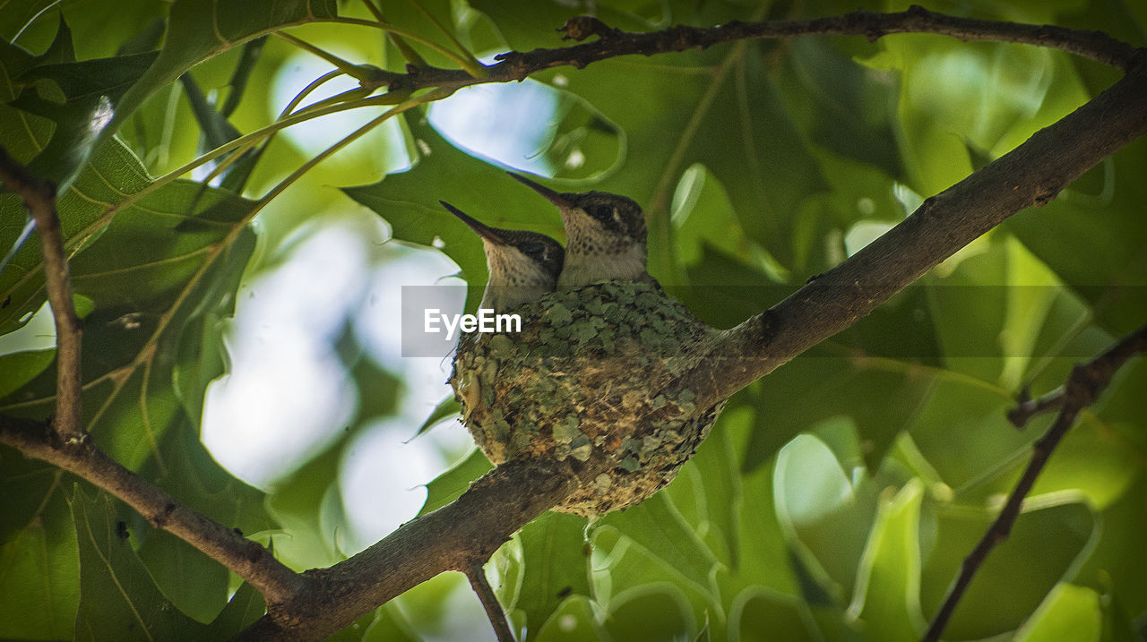Low Angle View Of Birds Perching In Nest On Tree