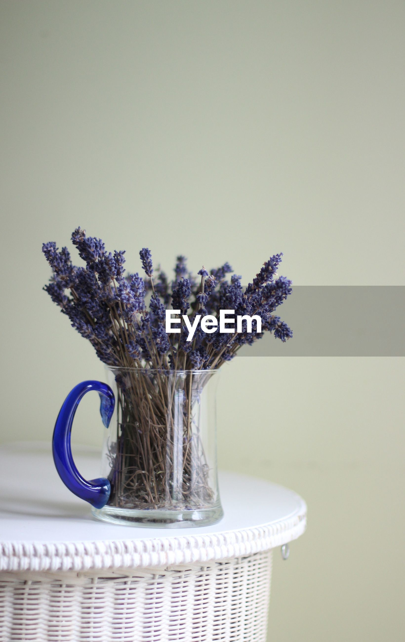 Close-up of purple flower in jar on table against wall