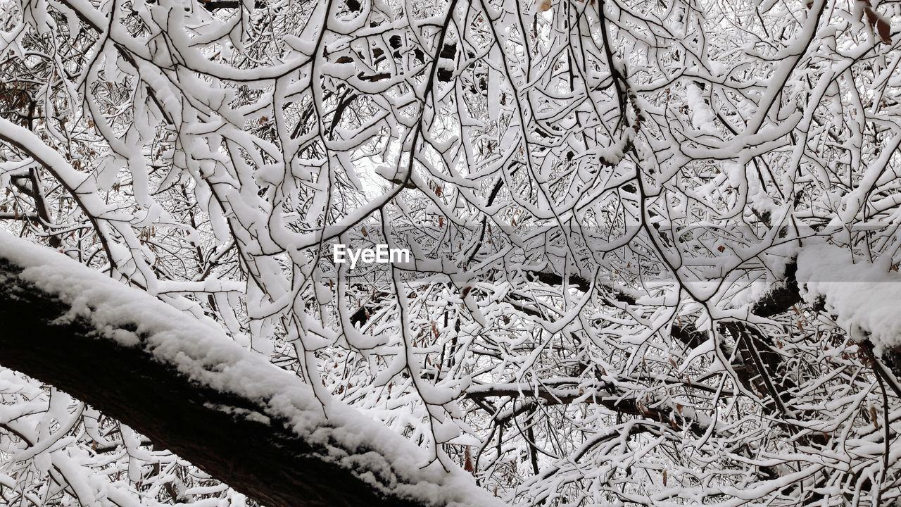winter, cold temperature, nature, day, no people, outdoors, snow, bare tree, branch, tree, beauty in nature, close-up