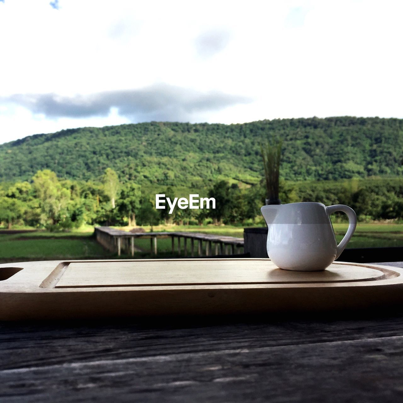tree, plant, cup, table, sky, mug, no people, nature, day, wood - material, growth, food and drink, drink, green color, coffee cup, outdoors, railing, refreshment, saucer, tea cup, crockery