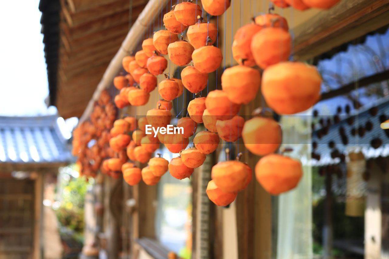 food and drink, food, built structure, architecture, orange color, fruit, healthy eating, focus on foreground, building exterior, day, abundance, no people, freshness, hanging, large group of objects, wellbeing, building, outdoors, for sale, persimmon, chinese lantern, ripe, orange