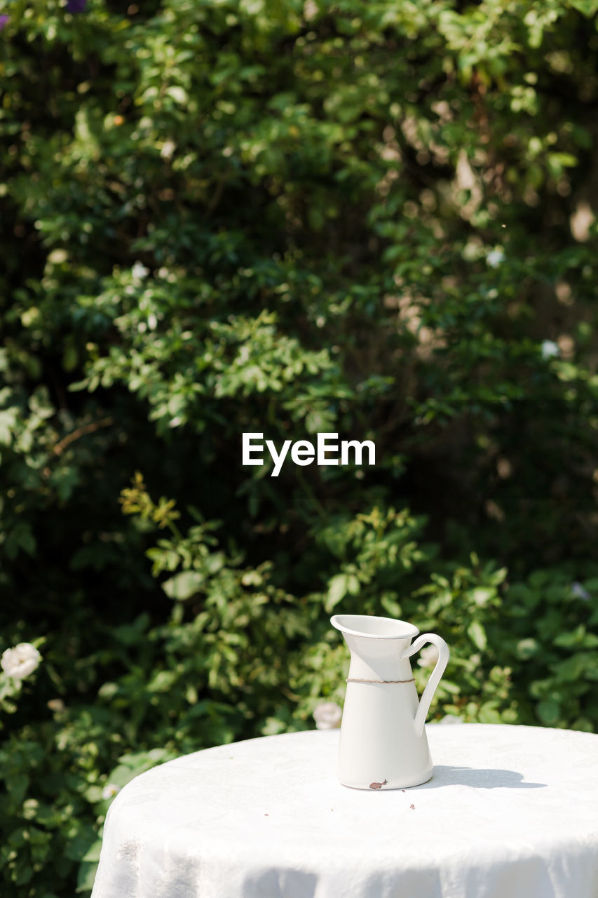 plant, day, no people, cup, tree, food and drink, focus on foreground, white color, nature, mug, drink, sunlight, green color, refreshment, table, outdoors, crockery, front or back yard, still life, coffee cup, coffee pot, tea cup, pitcher - jug