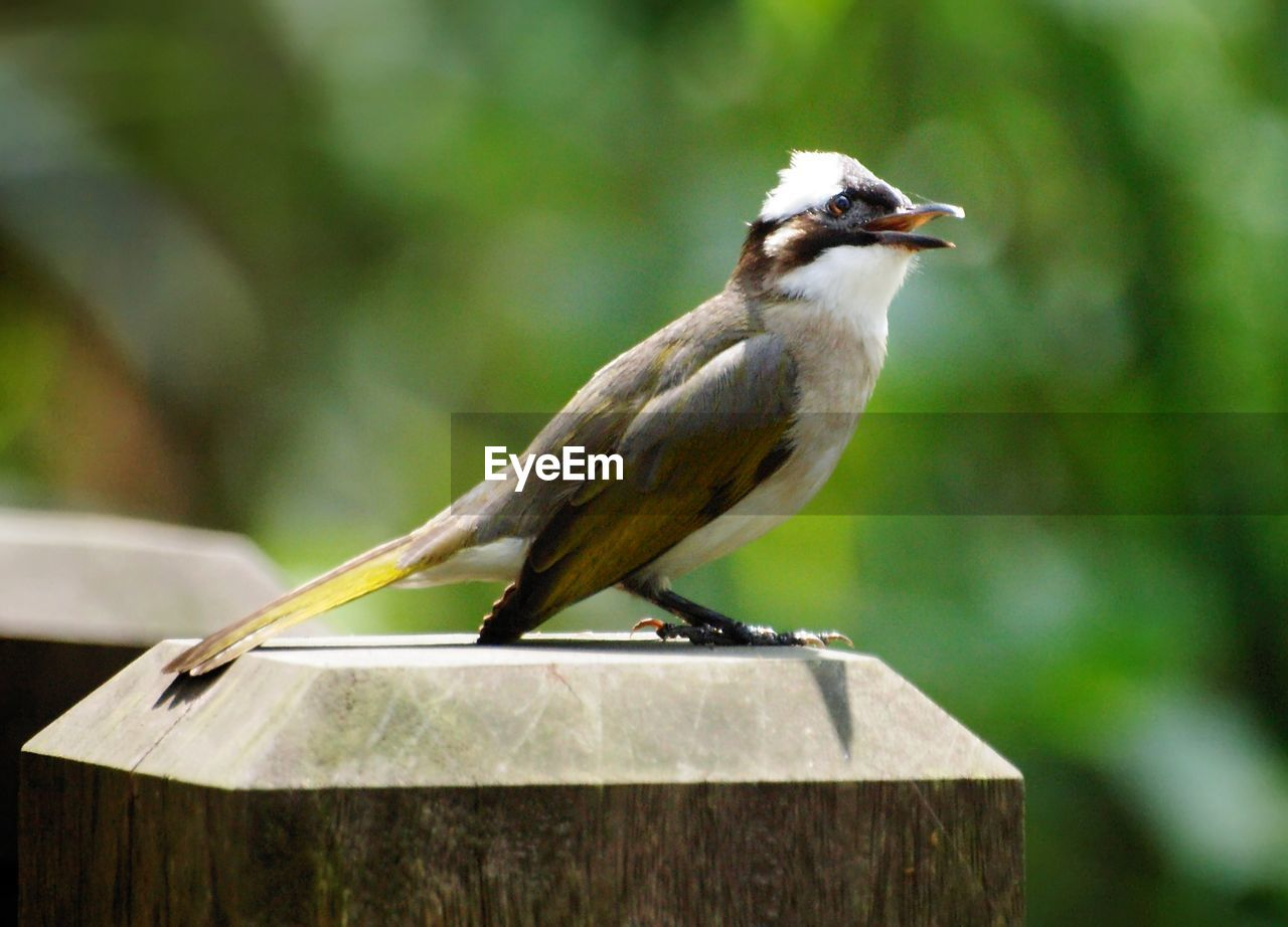 bird, vertebrate, animal themes, animal, animals in the wild, animal wildlife, perching, one animal, focus on foreground, no people, close-up, day, wood - material, nature, outdoors, full length, tree, side view, beauty in nature, looking away