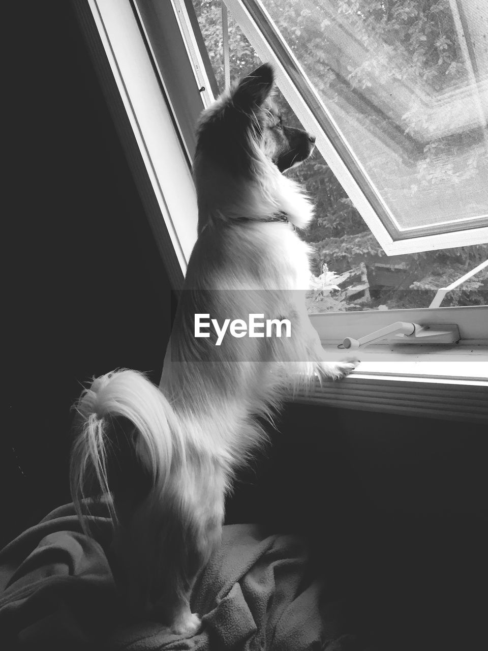 pets, domestic animals, animal themes, one animal, mammal, dog, window, indoors, looking through window, domestic cat, home interior, sitting, no people, day