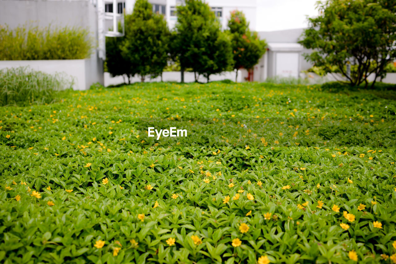 plant, growth, green color, grass, day, field, architecture, nature, built structure, building exterior, land, selective focus, freshness, outdoors, no people, focus on foreground, tree, beauty in nature, building, leaf, hedge
