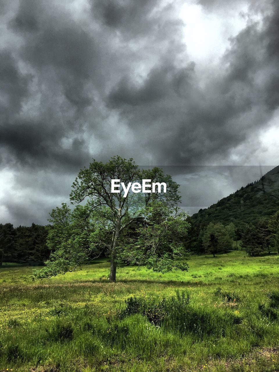 tree, nature, storm cloud, landscape, ominous, field, cloud - sky, beauty in nature, sky, no people, grass, storm, tranquility, outdoors, day, scenics, tornado, thunderstorm