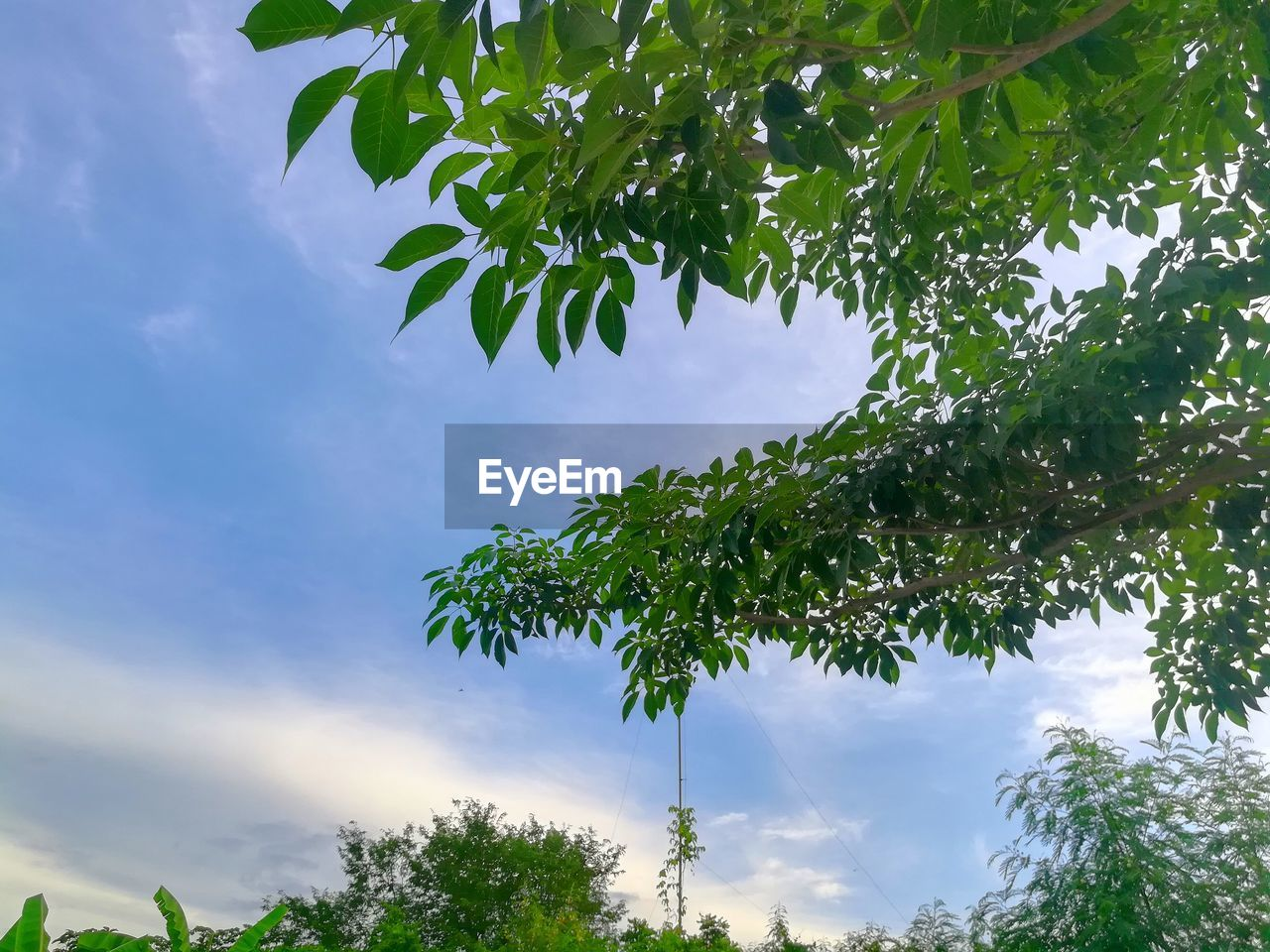 tree, sky, low angle view, nature, leaf, day, growth, cloud - sky, beauty in nature, no people, outdoors, branch, plant, freshness