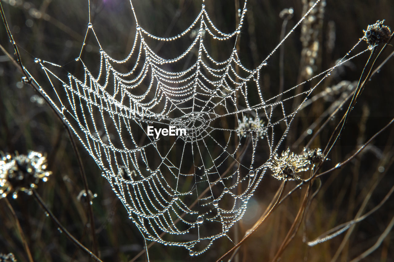 CLOSE-UP OF SPIDER WEB ON WET LEAVES