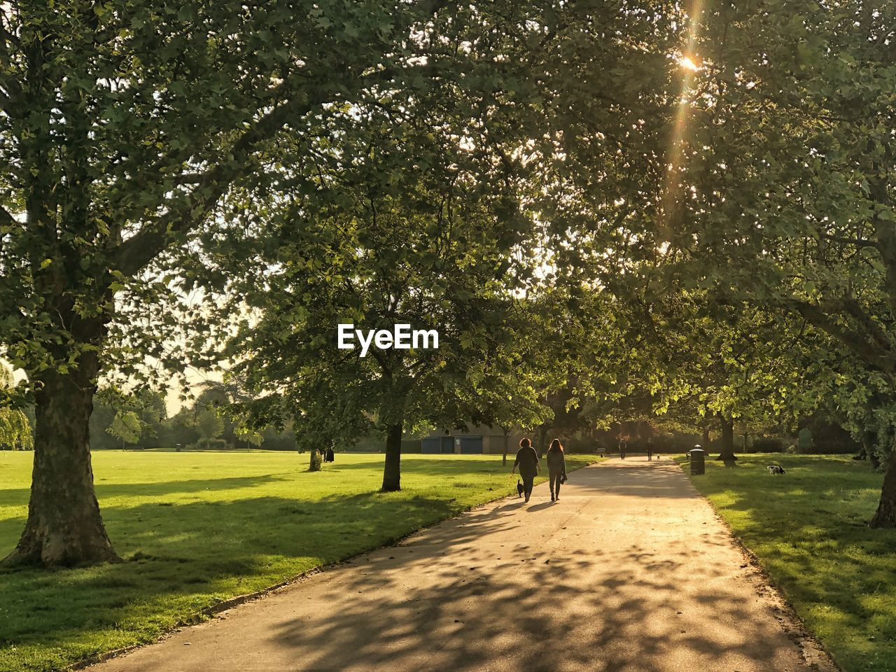 tree, plant, sunlight, nature, growth, real people, green color, day, shadow, park, two people, beauty in nature, footpath, walking, park - man made space, full length, people, rear view, men, grass, outdoors