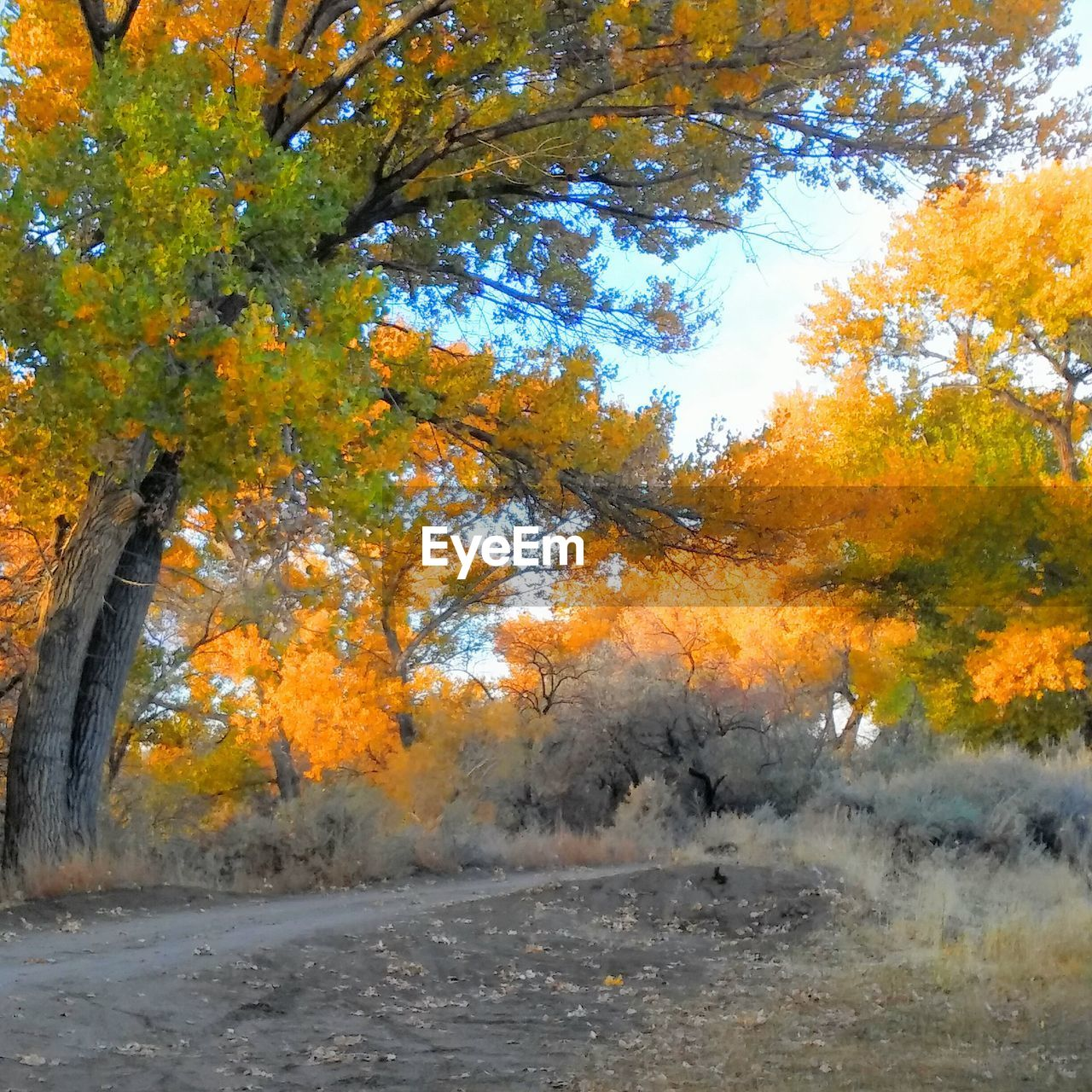 autumn, tree, change, leaf, nature, orange color, beauty in nature, scenics, forest, tranquil scene, tranquility, no people, outdoors, day, landscape, yellow, sky