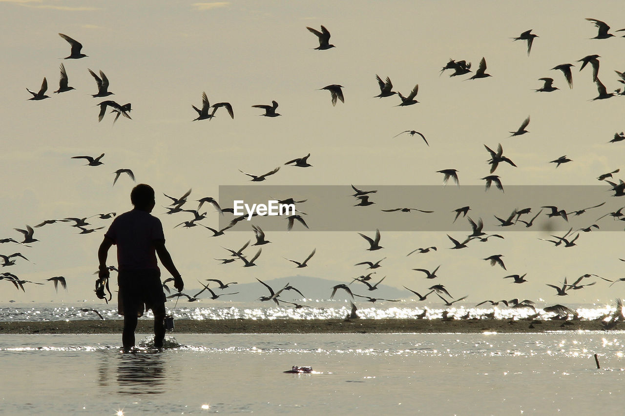 Silhouette man in sea while flock of birds flying against sky