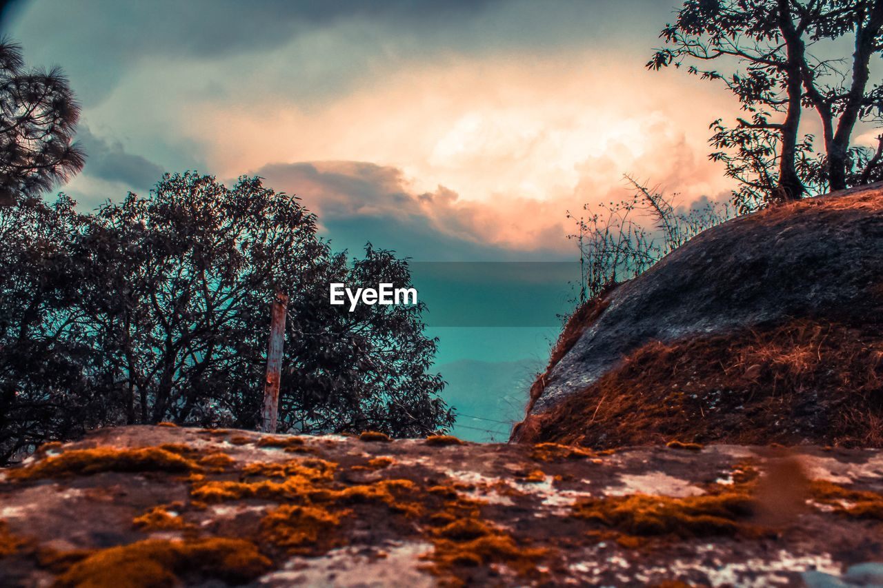 tree, sky, plant, sunset, beauty in nature, cloud - sky, nature, rock, rock - object, tranquility, scenics - nature, tranquil scene, solid, no people, outdoors, land, growth, orange color, non-urban scene, idyllic