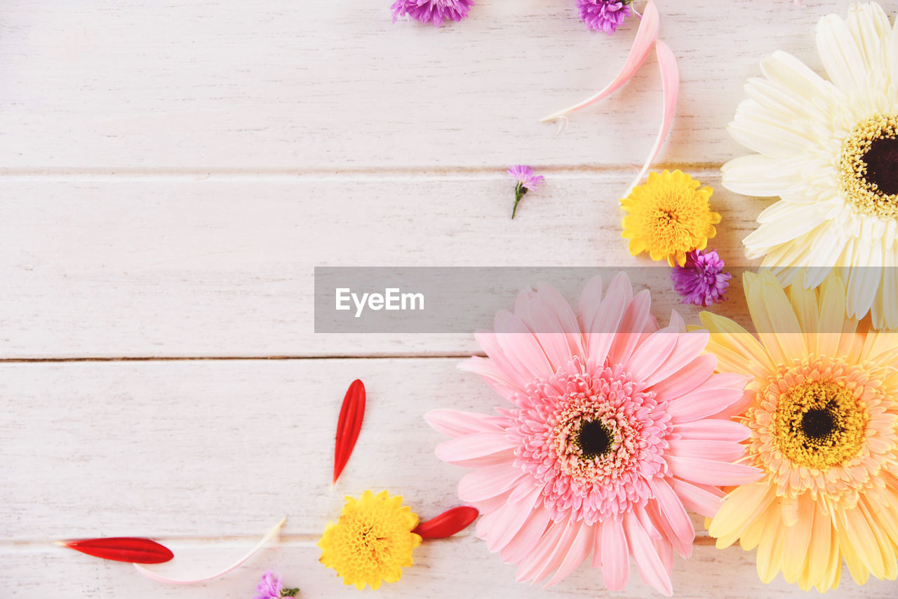 flower, flowering plant, plant, freshness, pink color, vulnerability, fragility, beauty in nature, flower head, petal, inflorescence, nature, close-up, high angle view, table, gerbera daisy, no people, multi colored, daisy, wood - material
