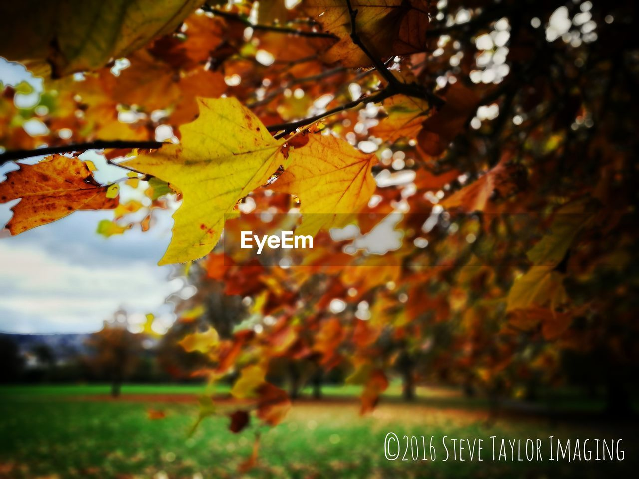 autumn, leaf, change, nature, tree, beauty in nature, growth, day, outdoors, grass, maple leaf, focus on foreground, scenics, green color, no people, branch, close-up, maple, freshness