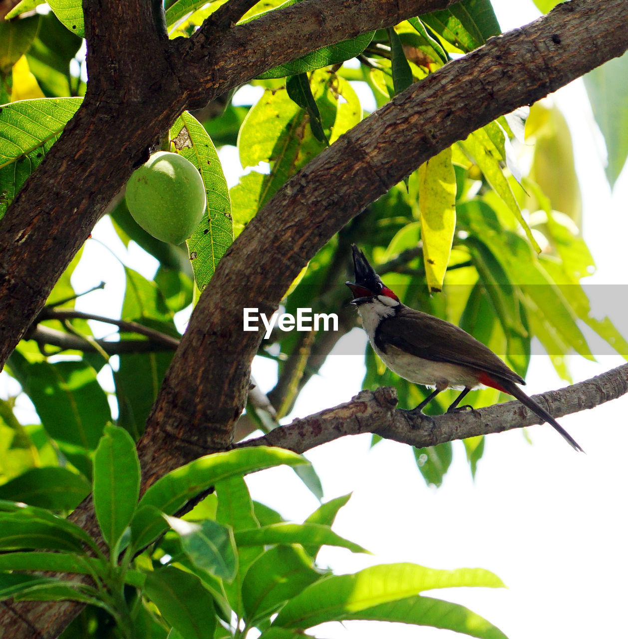 animals in the wild, plant, animal wildlife, vertebrate, tree, bird, leaf, branch, plant part, animal, low angle view, one animal, animal themes, perching, nature, growth, no people, green color, day, outdoors