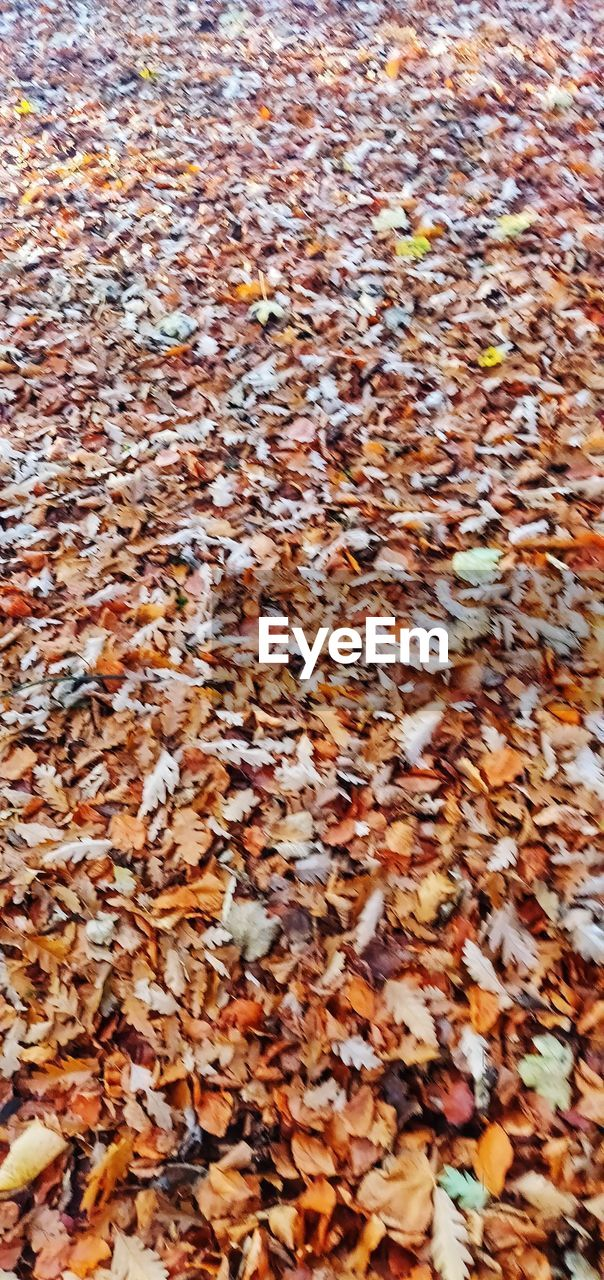 plant part, leaf, backgrounds, autumn, full frame, abundance, change, leaves, high angle view, large group of objects, day, nature, no people, falling, dry, beauty in nature, land, close-up, outdoors, natural pattern, natural condition, autumn collection