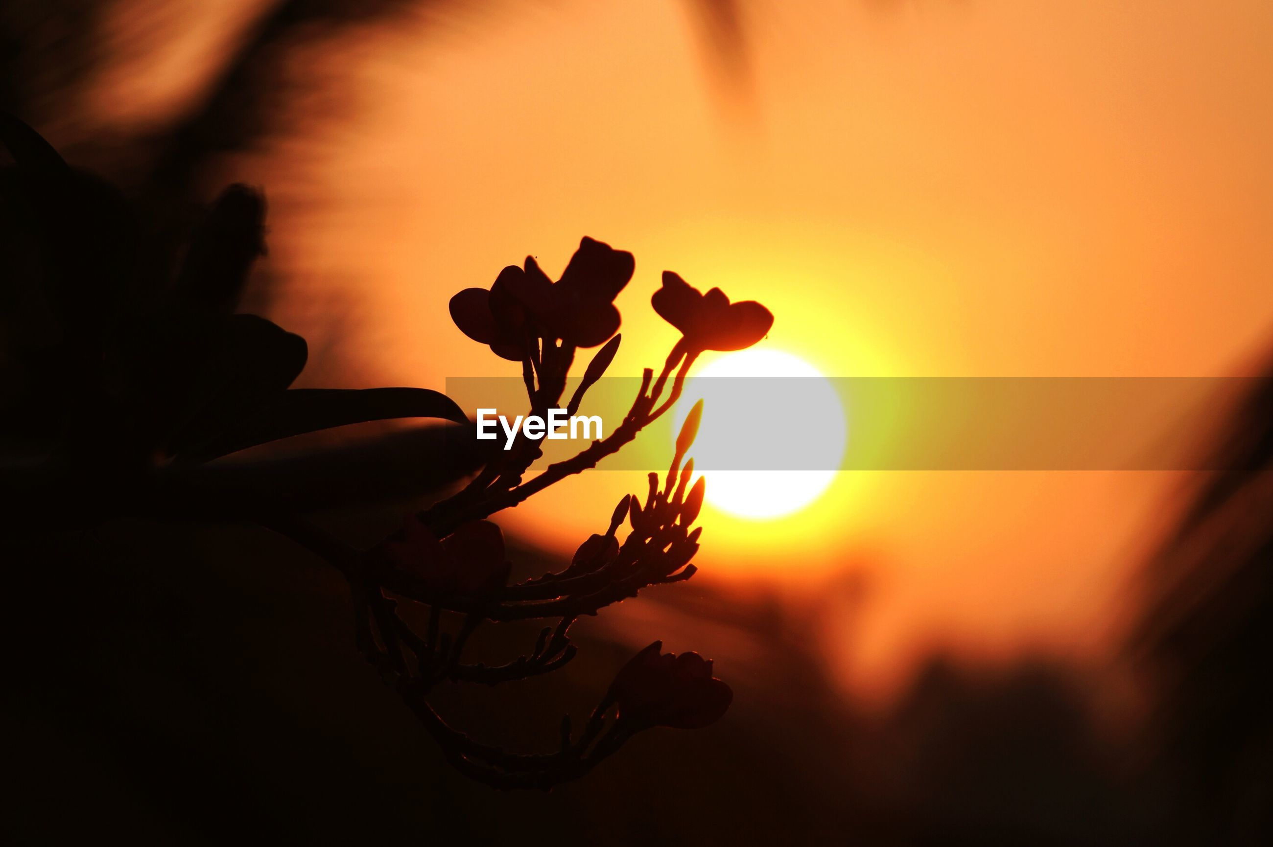 sunset, flower, close-up, silhouette, beauty in nature, fragility, focus on foreground, plant, petal, orange color, nature, growth, stem, sun, flower head, sky, selective focus, freshness, single flower, sunlight