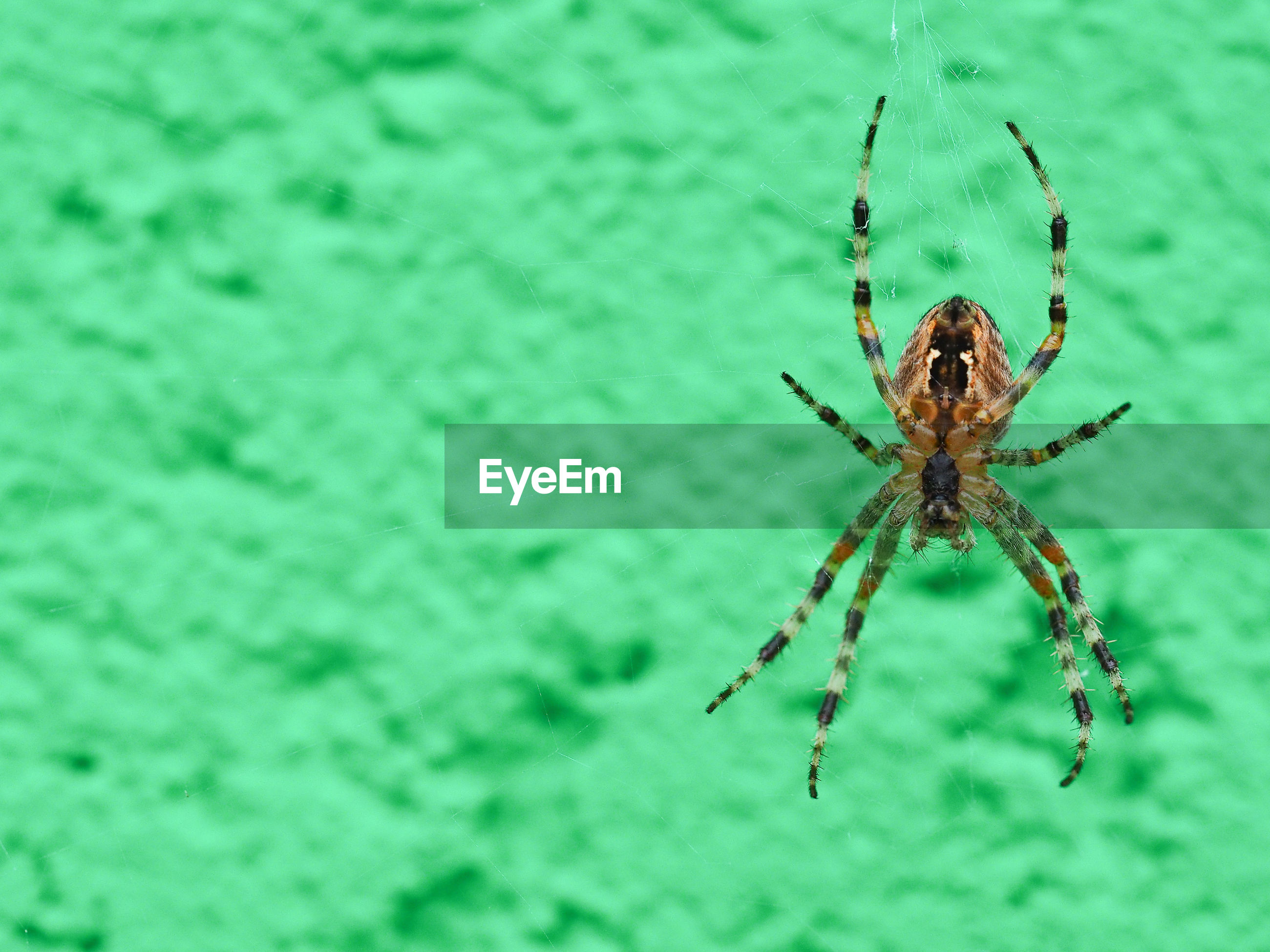 Close-up of spider on green surface
