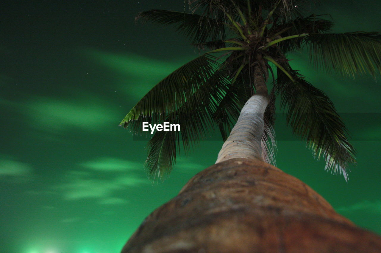 tree, palm tree, trunk, tree trunk, tropical climate, low angle view, plant, growth, no people, green color, nature, leaf, coconut palm tree, sky, beauty in nature, plant part, outdoors, tranquility, branch, night, palm leaf, tropical tree, bark, directly below