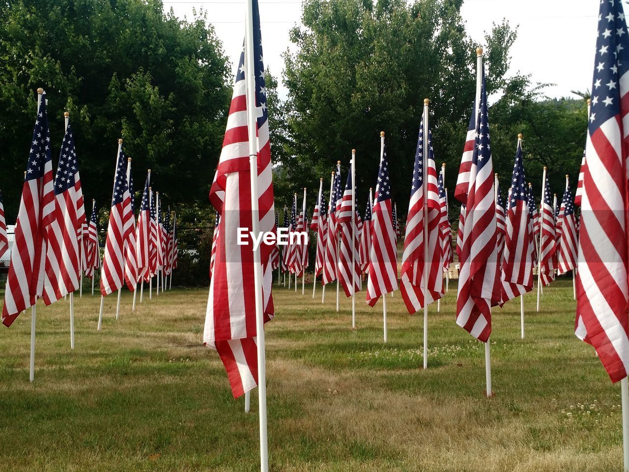 plant, flag, patriotism, tree, grass, red, field, nature, day, in a row, land, no people, striped, pride, environment, outdoors, independence, wind, government