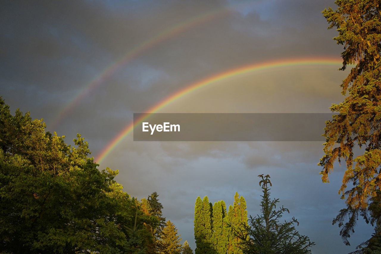rainbow, double rainbow, beauty in nature, tree, nature, multi colored, sky, scenics, cloud - sky, tranquility, idyllic, no people, tranquil scene, weather, day, outdoors, low angle view, natural phenomenon, spectrum, autumn