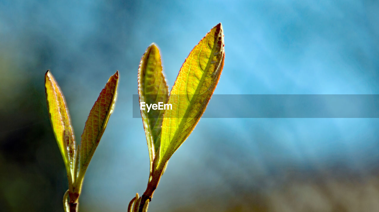 growth, nature, plant, beauty in nature, outdoors, no people, tranquility, close-up, day, freshness, fragility, sky