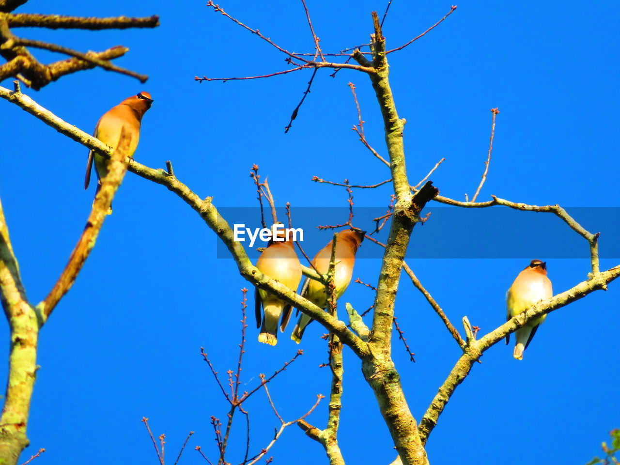 tree, sky, blue, low angle view, branch, clear sky, plant, no people, nature, bird, day, perching, beauty in nature, bare tree, outdoors, vertebrate, tranquility, animals in the wild, animal wildlife, growth