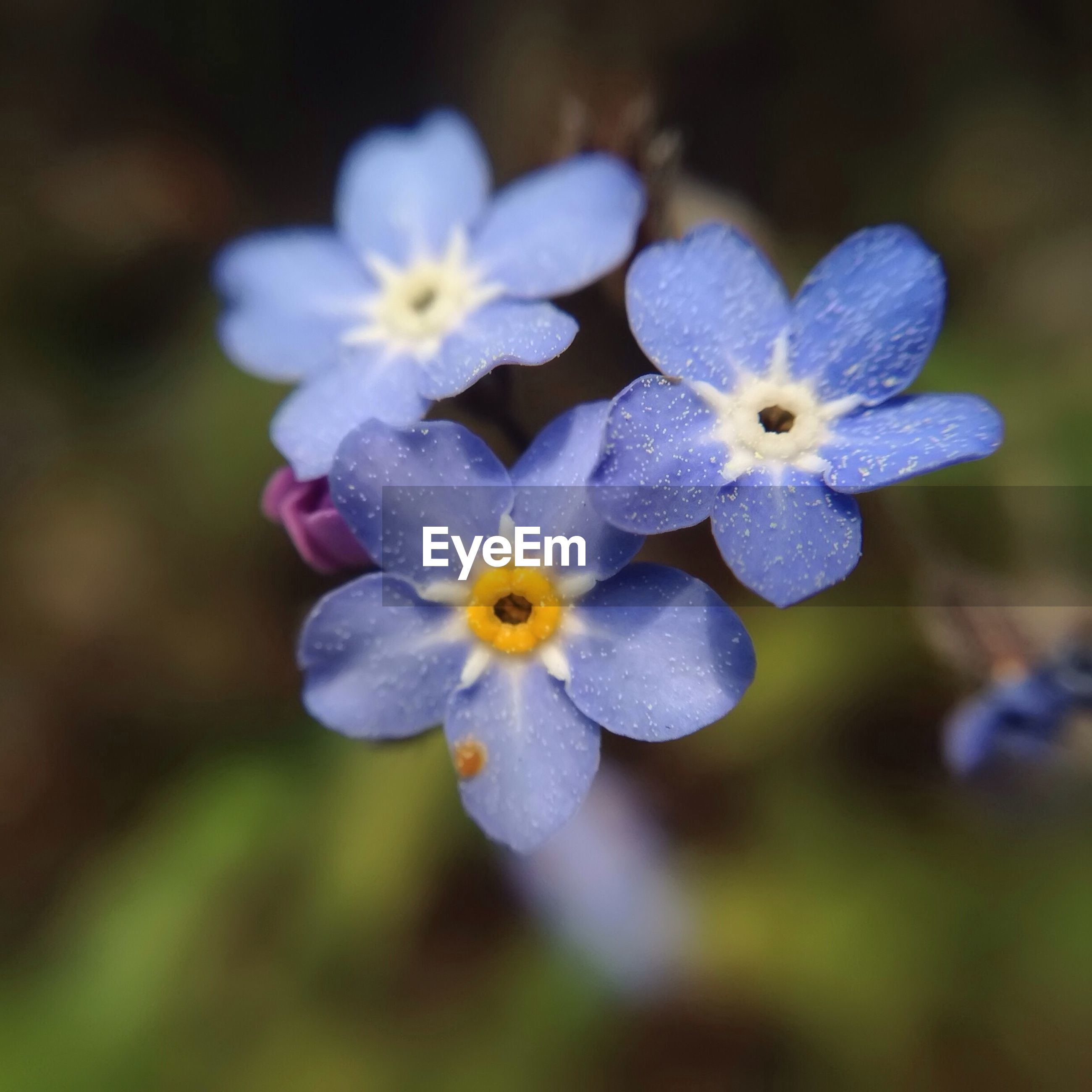 Close-up of blue flowers blooming in field