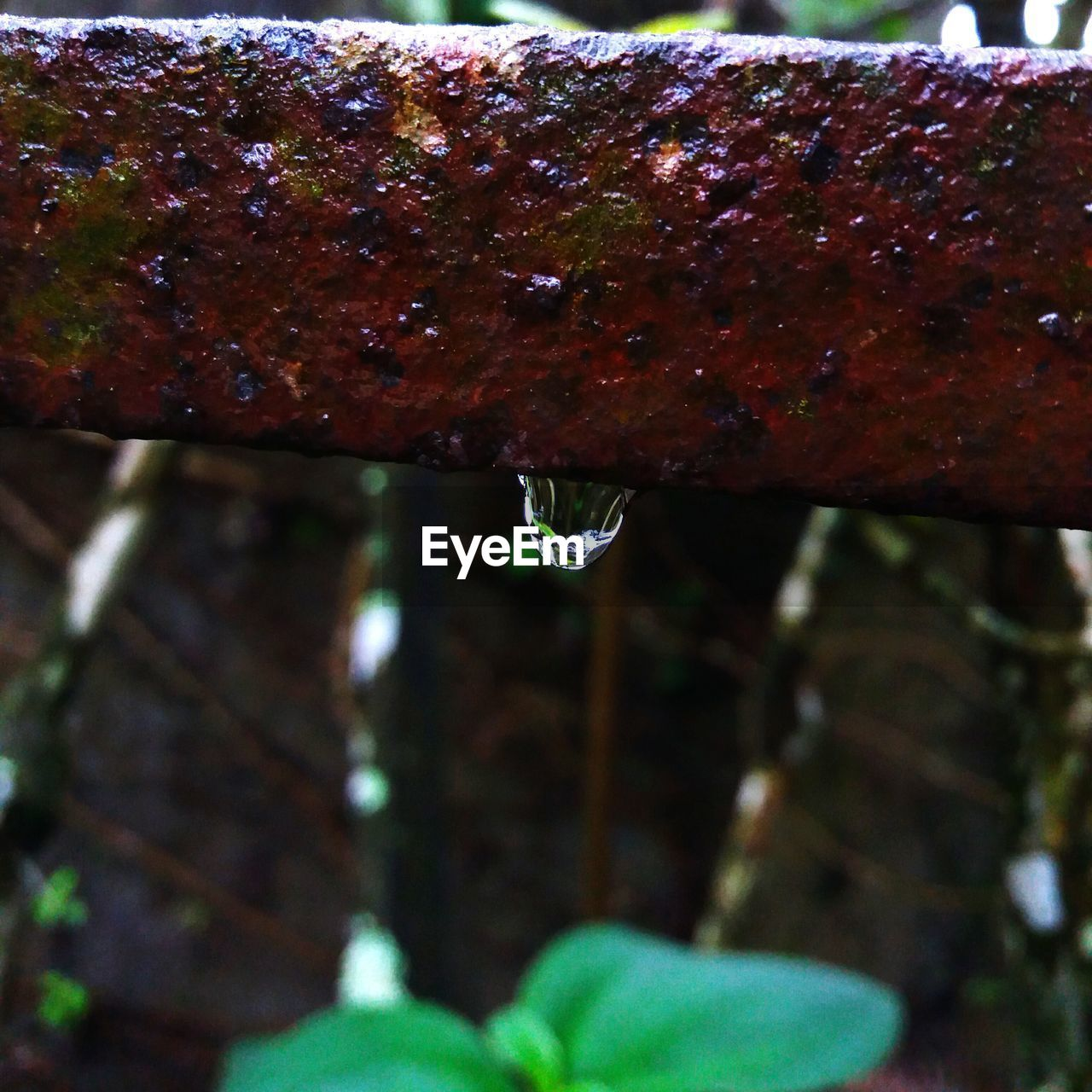 drop, close-up, no people, day, nature, water, outdoors, growth, leaf, beauty in nature, freshness, animal themes, dripping
