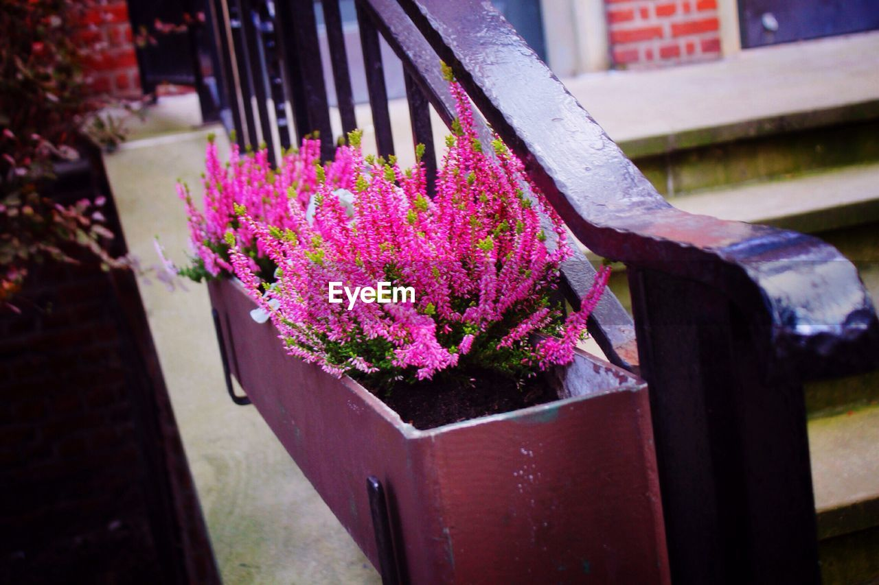 purple, flower, no people, outdoors, built structure, religion, day, nature, focus on foreground, spirituality, plant, close-up, building exterior, architecture, fragility, beauty in nature, freshness, window box