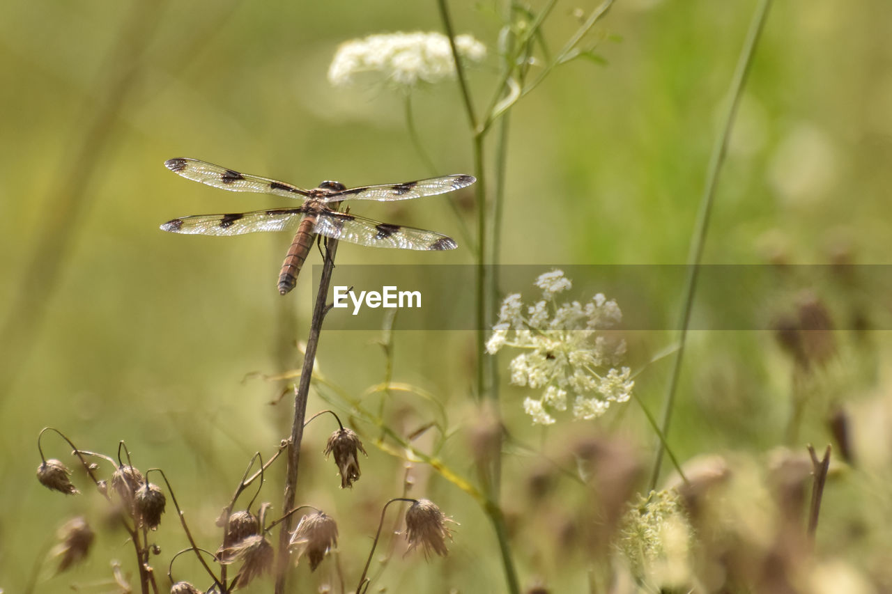 plant, growth, beauty in nature, flower, close-up, flowering plant, fragility, vulnerability, nature, selective focus, no people, day, focus on foreground, plant stem, freshness, animal wildlife, animal, animals in the wild, invertebrate, insect, outdoors, flower head, pollination, butterfly - insect