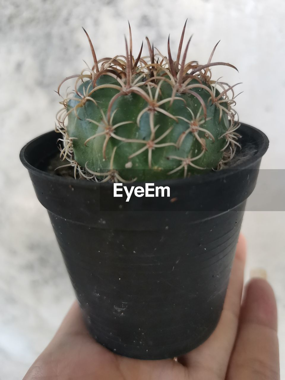 CROPPED IMAGE OF PERSON HOLDING CACTUS IN POT