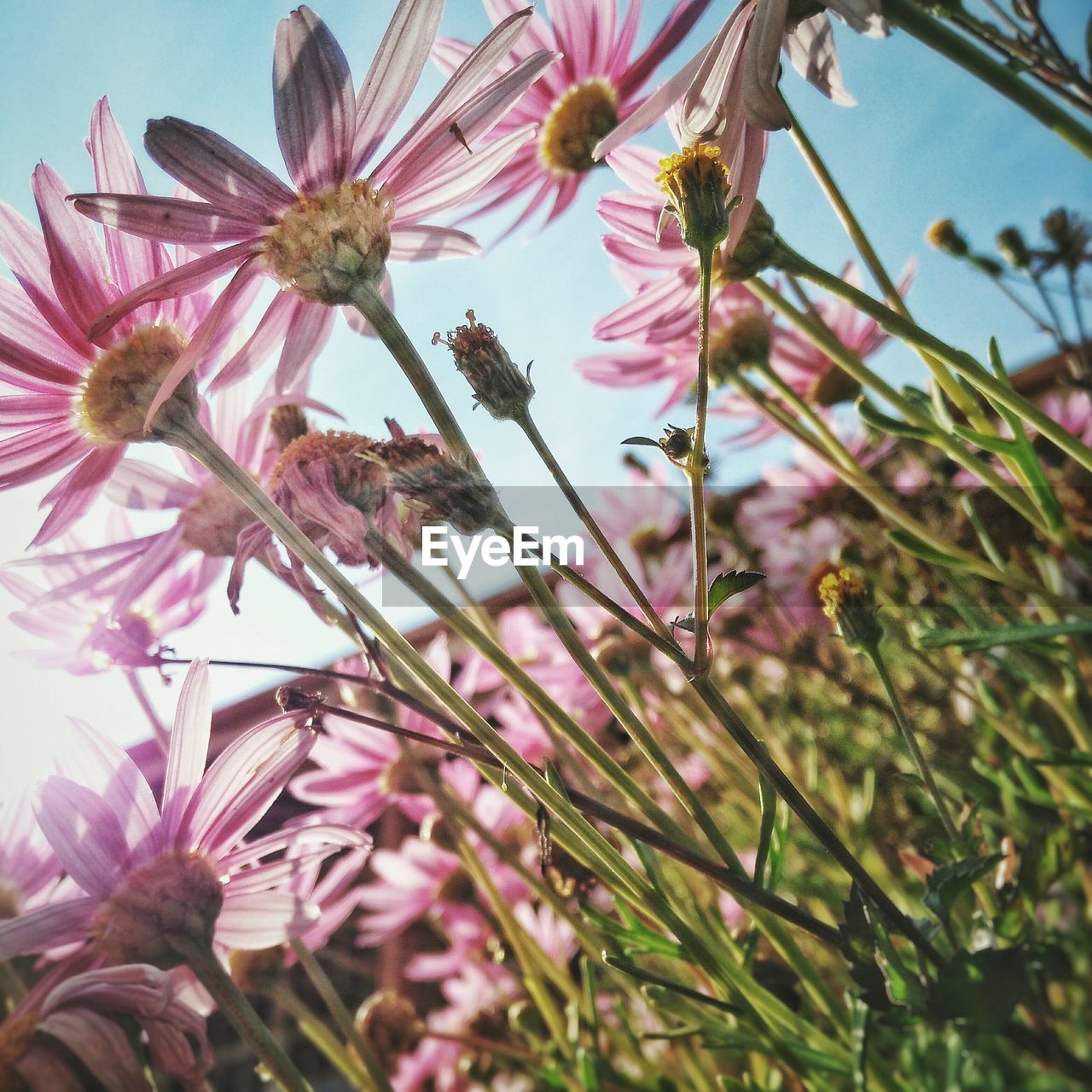 flower, growth, fragility, nature, freshness, beauty in nature, tree, day, blossom, pink color, petal, plant, low angle view, no people, outdoors, flower head, close-up, springtime, branch