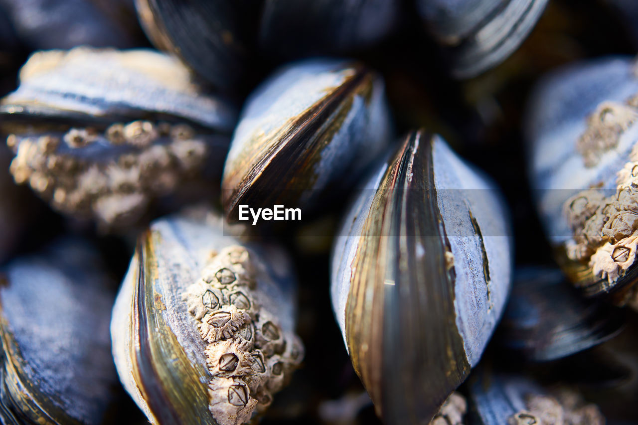 food, close-up, selective focus, food and drink, still life, no people, healthy eating, large group of objects, full frame, freshness, wellbeing, indoors, backgrounds, abundance, day, textured, shell, for sale, pattern, seed