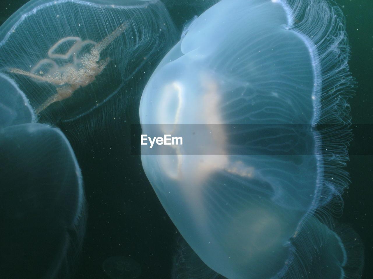 Close-Up Of Jellyfish Swimming Underwater At Aquarium