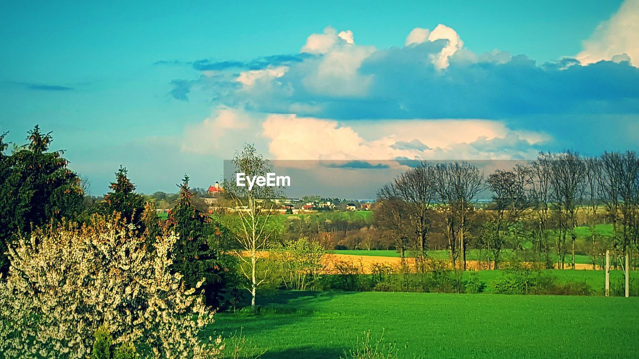 sky, tree, beauty in nature, nature, tranquility, tranquil scene, scenics, cloud - sky, field, landscape, no people, growth, grass, outdoors, day, plant