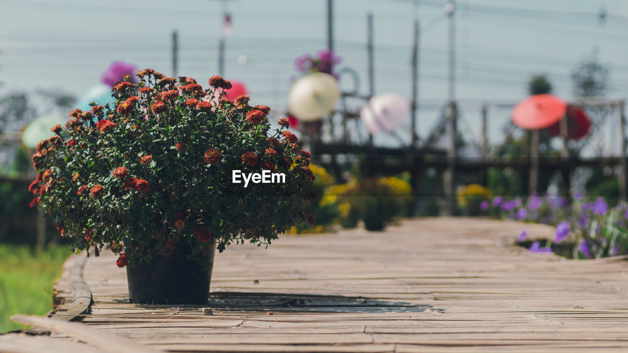 flower, flowering plant, plant, nature, focus on foreground, growth, vulnerability, fragility, no people, beauty in nature, day, freshness, footpath, table, close-up, outdoors, flower head, wood - material, selective focus, inflorescence, flower pot, flower arrangement, bouquet