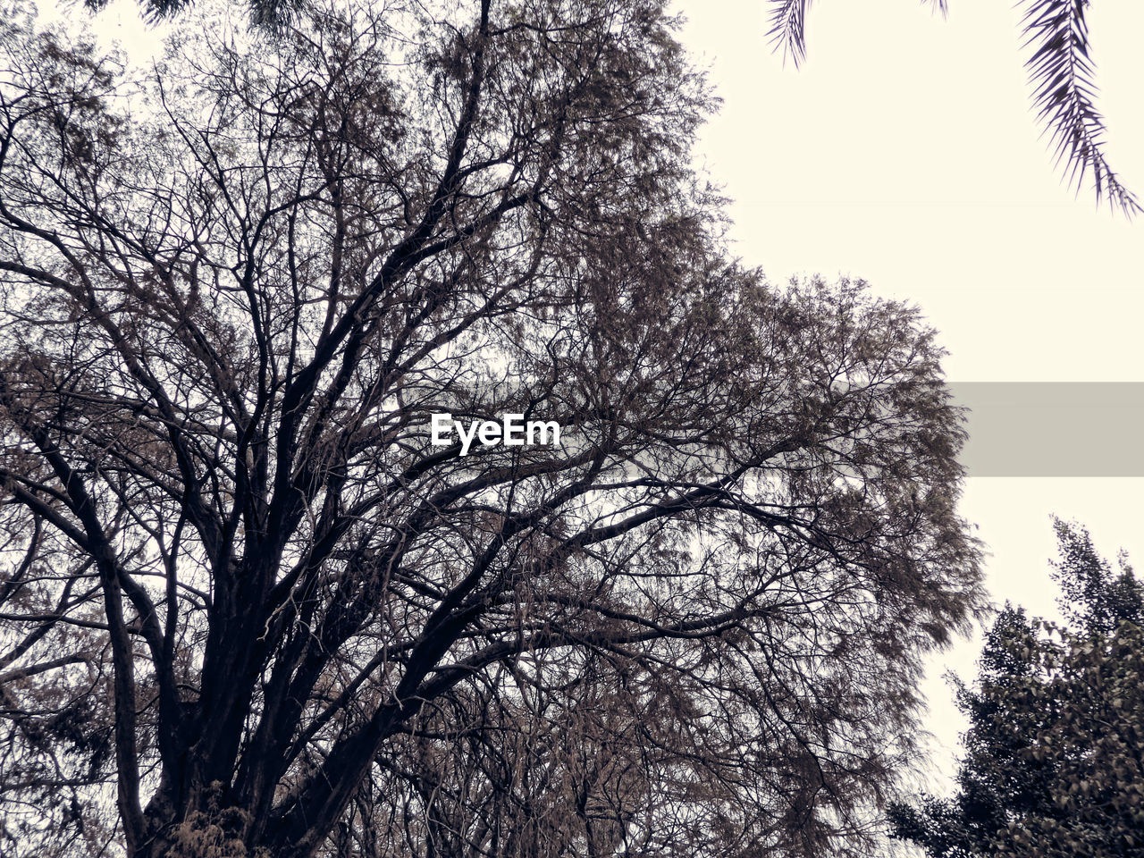 tree, low angle view, nature, branch, outdoors, clear sky, no people, bare tree, sky, tranquility, beauty in nature, day, growth