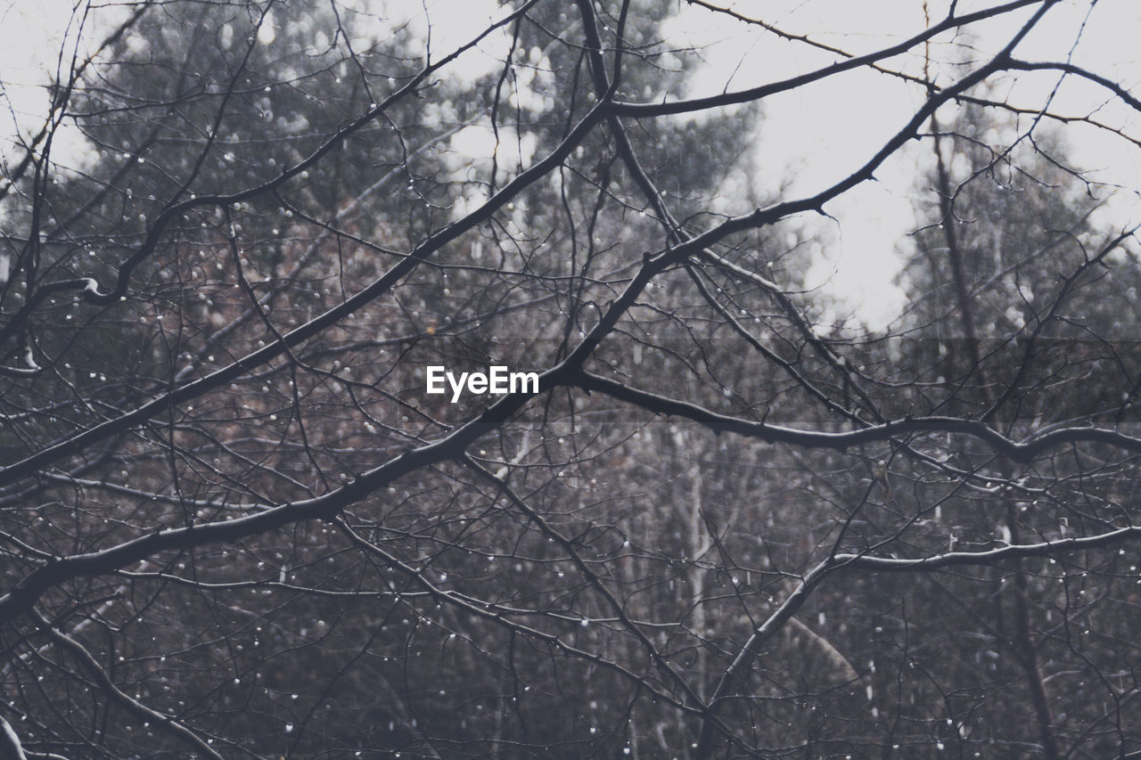 Drops Growth Rain Raindrops Rainy Days Water Droplets Weather Winter Beauty In Nature Beauty In Nature Branch Day Forest Forestwalk Nature No People Outdoors Season  Selective Focus Tree Water Waterdrops Autumn Mood